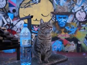 Street Art Graffiti Buenos Aires