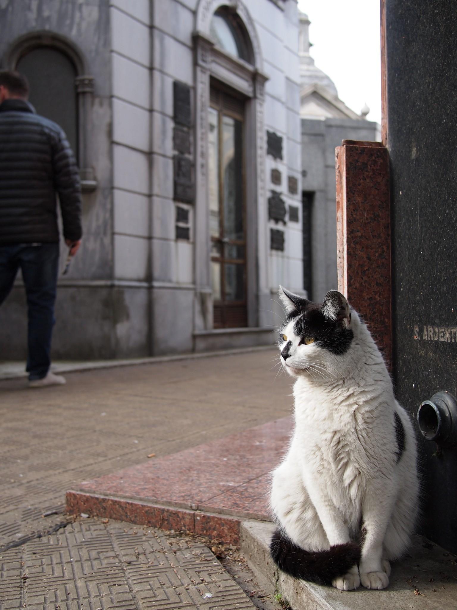The Graveyard Cats Of La Recoleta Cemetery Buenos Aires