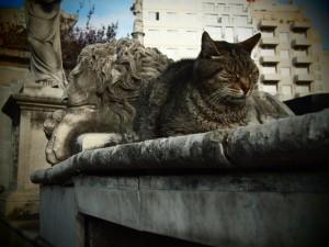 Cat imitating statue in Cementerio de la Recoleta